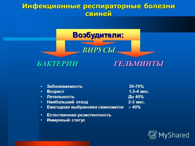 Инфекционные респираторные болезни свиней ВИРУСЫ ВИРУСЫ БАКТЕРИИ ГЕЛЬМИНТЫ БАКТЕРИИ ГЕЛЬМИНТЫ Заболеваемость 30-70% Возраст 1,5-4 мес. Летальность До 40% Наибольший отход 2-3 мес. Ежегодная выбраковка свиноматок 40% Естественная резистентность Иммунн