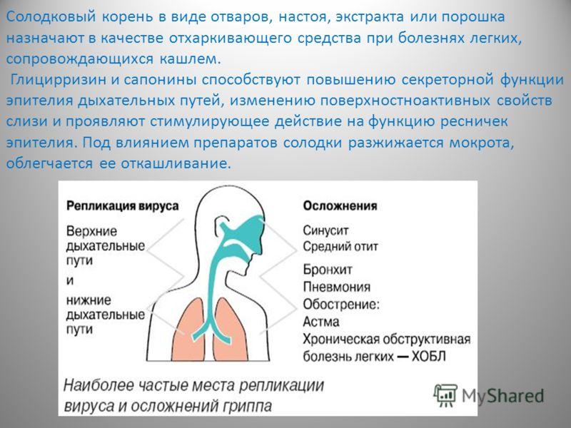 Солодковый корень в виде отваров, настоя, экстракта или порошка назначают в качестве отхаркивающего средства при болезнях легких, сопровождающихся кашлем. Глицирризин и сапонины способствуют повышению секреторной функции эпителия дыхательных путей, и