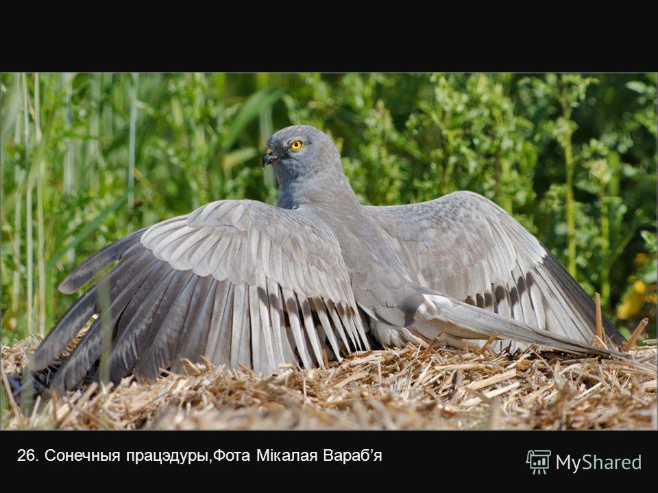25. Ушастик. Фото Дениса Табунова