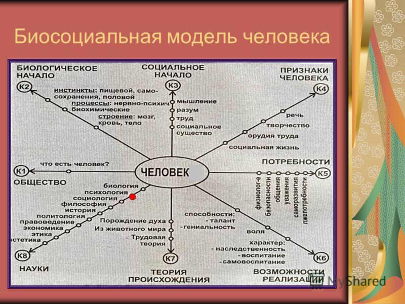 Биосоциальная модель человека