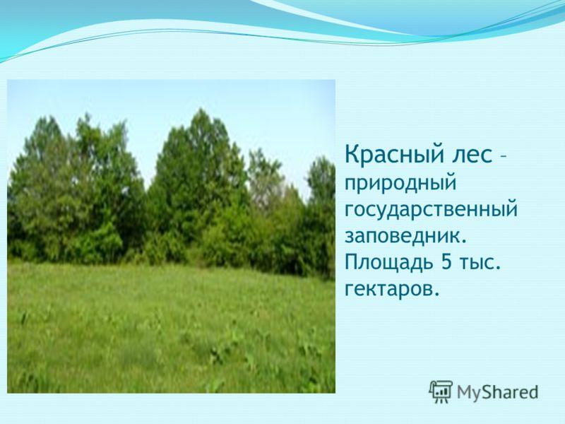 Красный лес – природный государственный заповедник. Площадь 5 тыс. гектаров.