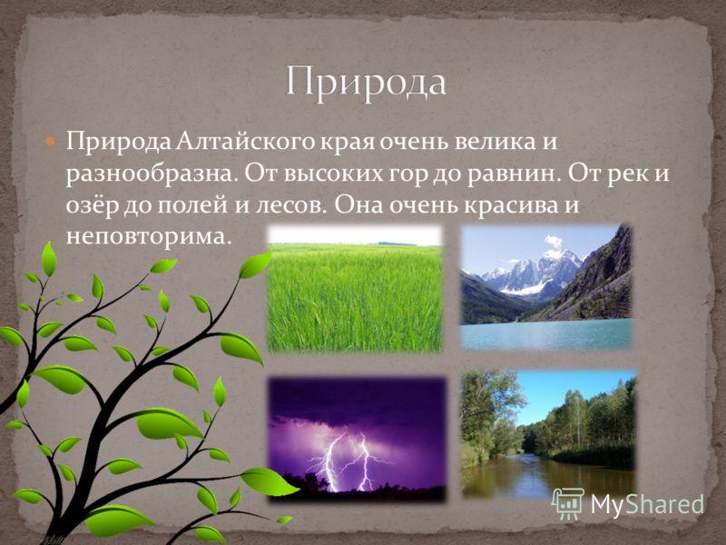 Природа Алтайского края очень велика и разнообразна. От высоких гор до равнин. От рек и озёр до полей и лесов. Она очень красива и неповторима.