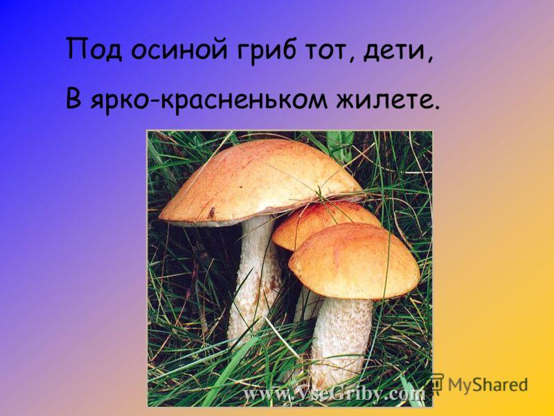 Под осиной гриб тот, дети, В ярко-красненьком жилете.