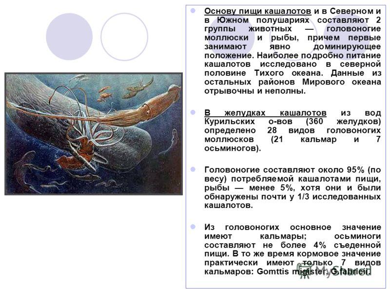 Основу пищи кашалотов и в Северном и в Южном полушариях составляют 2 группы животных головоногие моллюски и рыбы, причем первые занимают явно доминирующее положение. Наиболее подробно питание кашалотов исследовано в северной половине Тихого океана. Д