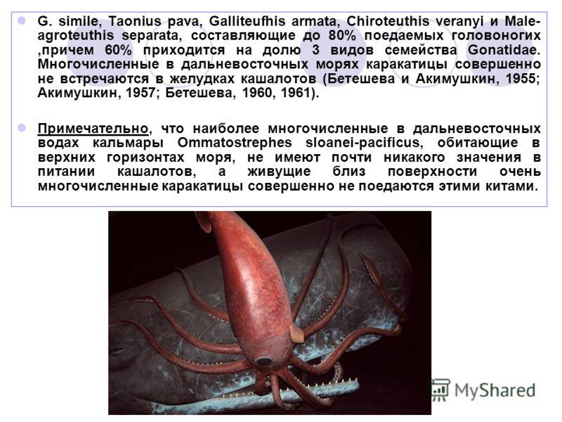 G. simile, Taonius pava, Galliteufhis armata, Chiroteuthis veranyi и Male- agroteuthis separata, составляющие до 80% поедаемых головоногих,причем 60% приходится на долю 3 видов семейства Gonatidae. Многочисленные в дальневосточных морях каракатицы со