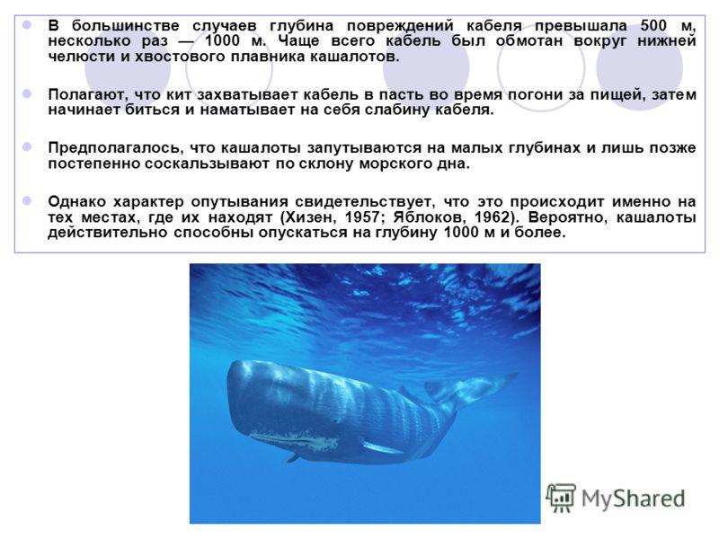 В большинстве случаев глубина повреждений кабеля превышала 500 м, несколько раз 1000 м. Чаще всего кабель был обмотан вокруг нижней челюсти и хвостового плавника кашалотов. Полагают, что кит захватывает кабель в пасть во время погони за пищей, затем