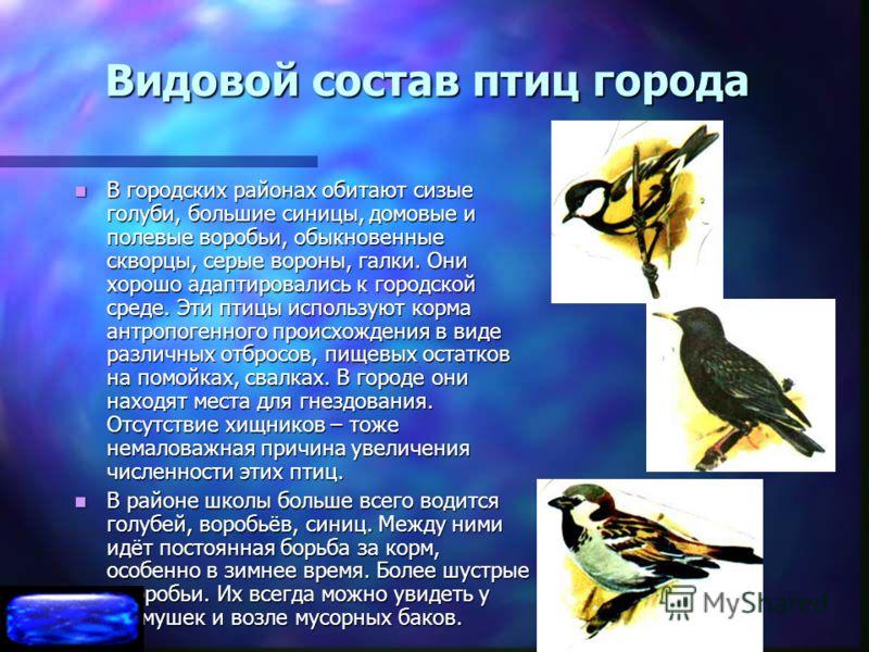 Видовой состав птиц города В городских районах обитают сизые голуби, большие синицы, домовые и полевые воробьи, обыкновенные скворцы, серые вороны, галки. Они хорошо адаптировались к городской среде. Эти птицы используют корма антропогенного происхож