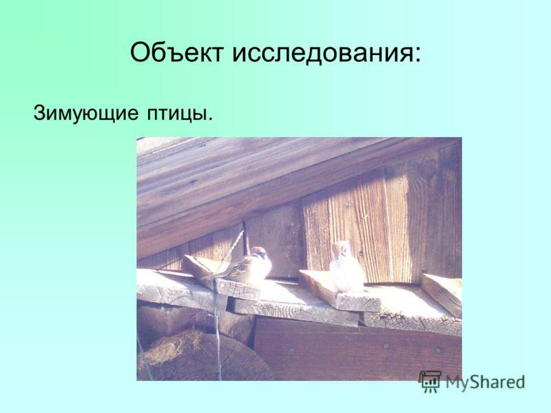 Объект исследования: Зимующие птицы.