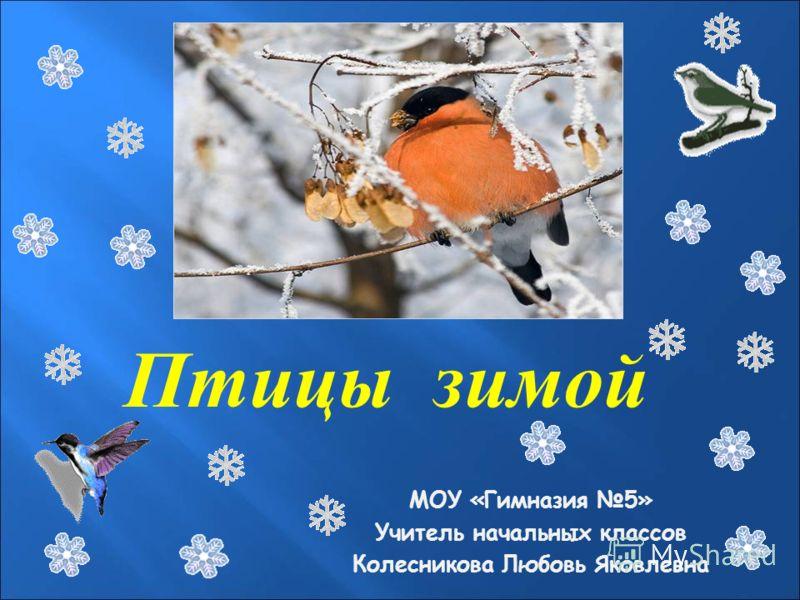 Птицы зимой МОУ «Гимназия 5» Учитель начальных классов Колесникова Любовь Яковлевна