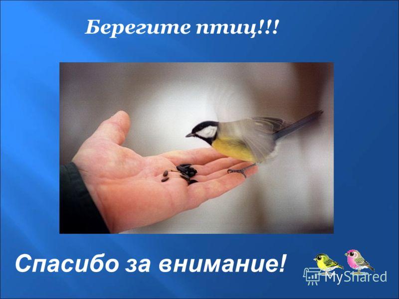Спасибо за внимание! Берегите птиц!!!