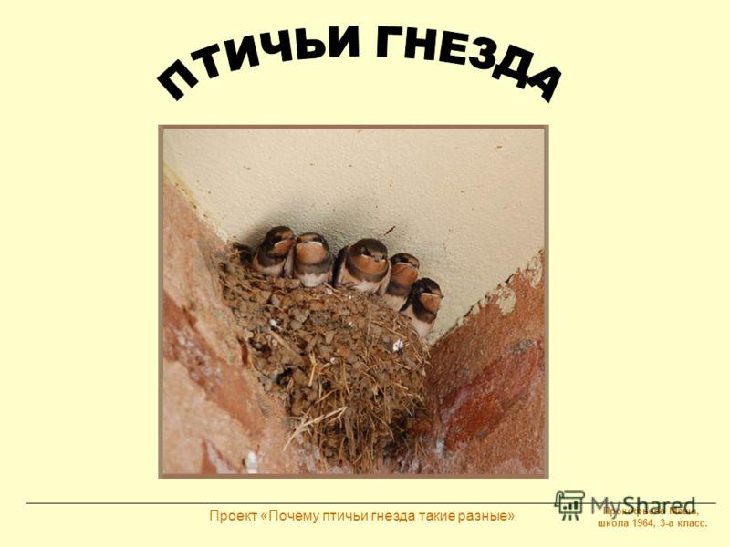 Прокофьева Маша, школа 1964, 3-а класс. Проект «Почему птичьи гнезда такие разные»