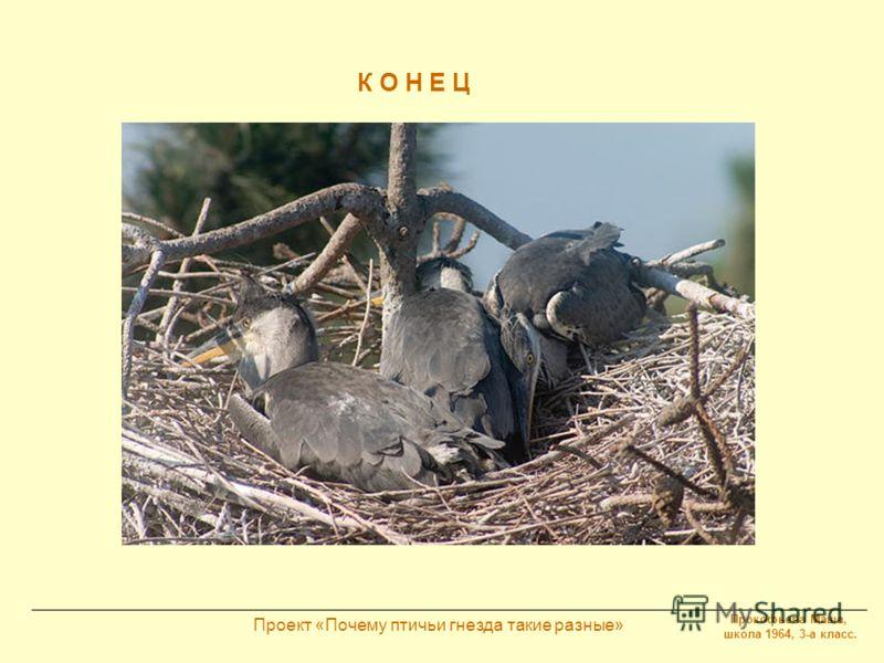 Прокофьева Маша, школа 1964, 3-а класс. Проект «Почему птичьи гнезда такие разные» К О Н Е Ц