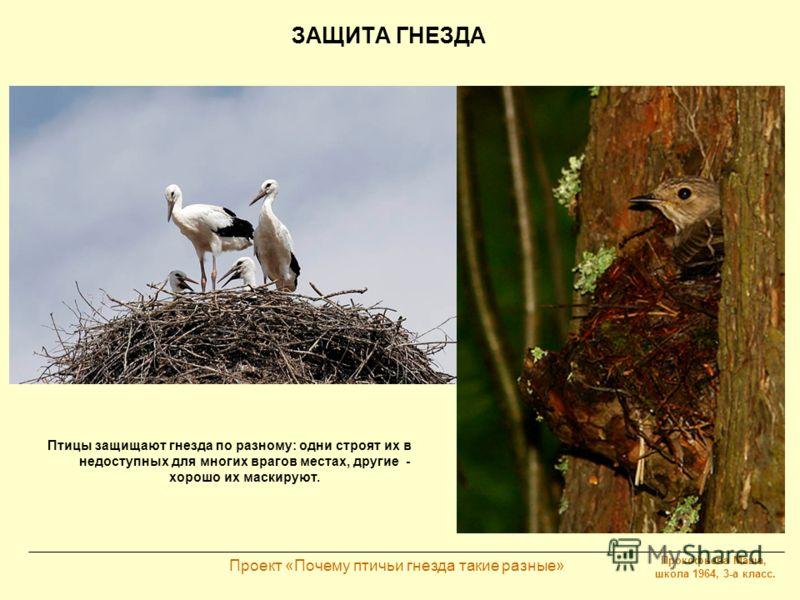 Прокофьева Маша, школа 1964, 3-а класс. Проект «Почему птичьи гнезда такие разные» ЗАЩИТА ГНЕЗДА Птицы защищают гнезда по разному: одни строят их в недоступных для многих врагов местах, другие - хорошо их маскируют.
