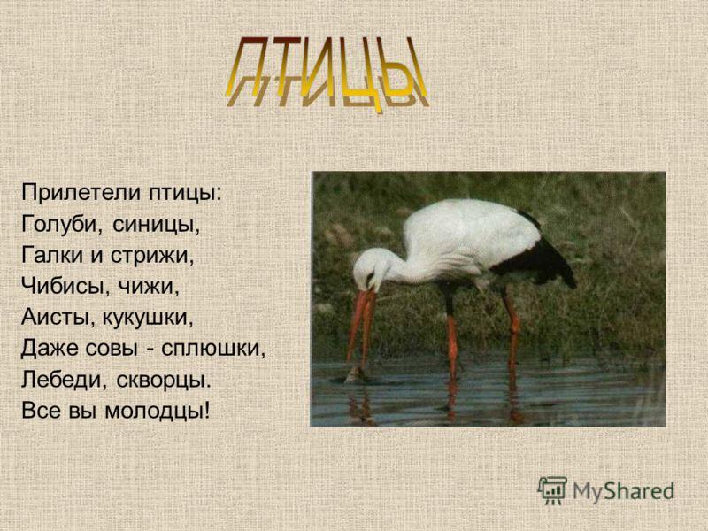 Прилетели птицы: Голуби, синицы, Галки и стрижи, Чибисы, чижи, Аисты, кукушки, Даже совы - сплюшки, Лебеди, скворцы. Все вы молодцы!