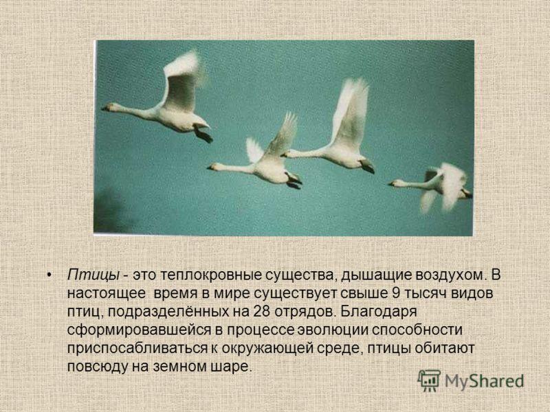 Птицы - это теплокровные существа, дышащие воздухом. В настоящее время в мире существует свыше 9 тысяч видов птиц, подразделённых на 28 отрядов. Благодаря сформировавшейся в процессе эволюции способности приспосабливаться к окружающей среде, птицы об