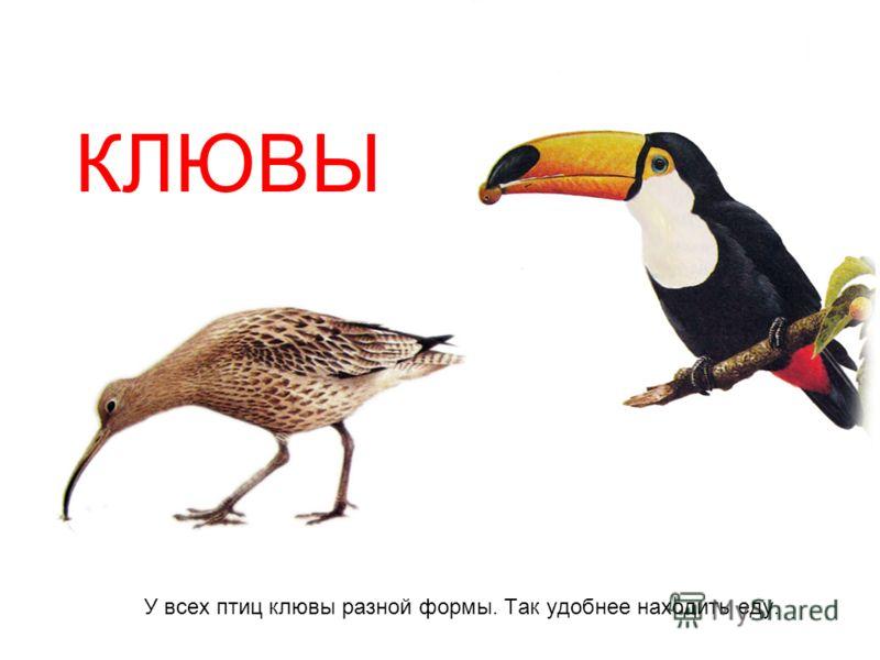 У всех птиц клювы разной формы. Так удобнее находить еду. КЛЮВЫ