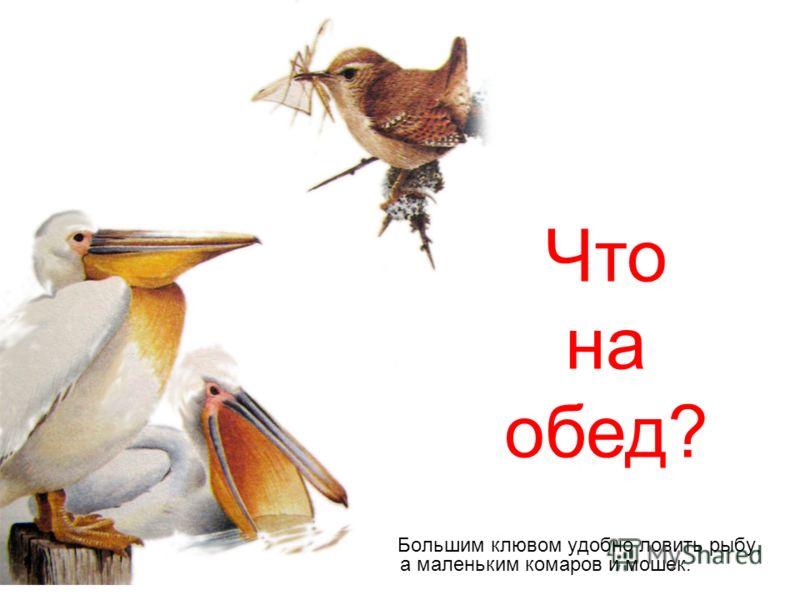 Большим клювом удобно ловить рыбу, а маленьким комаров и мошек. Что на обед?