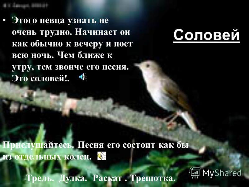 Давайте понаблюдаем за некоторыми из певчих птиц. Посмотрим и послушаем крылатых артистов. Ведь у каждой птицы своя песня и своя неповторимая мелодия. П тицы и артисты очень похожи друг на друга. Ощущение свободы жизненно необходимы артисту, а вдохно
