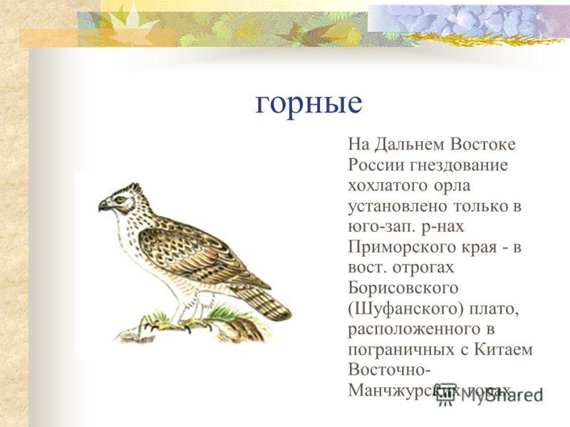 горные На Дальнем Востоке России гнездование хохлатого орла установлено только в юго-зап. р-нах Приморского края - в вост. отрогах Борисовского (Шуфанского) плато, расположенного в пограничных с Китаем Восточно- Манчжурских горах.