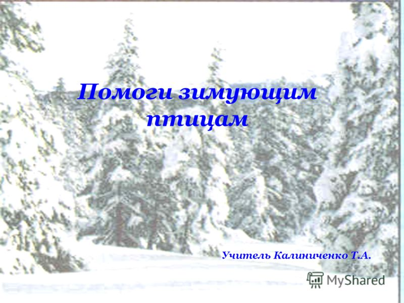 Помоги зимующим птицам Учитель Калиниченко Т.А.