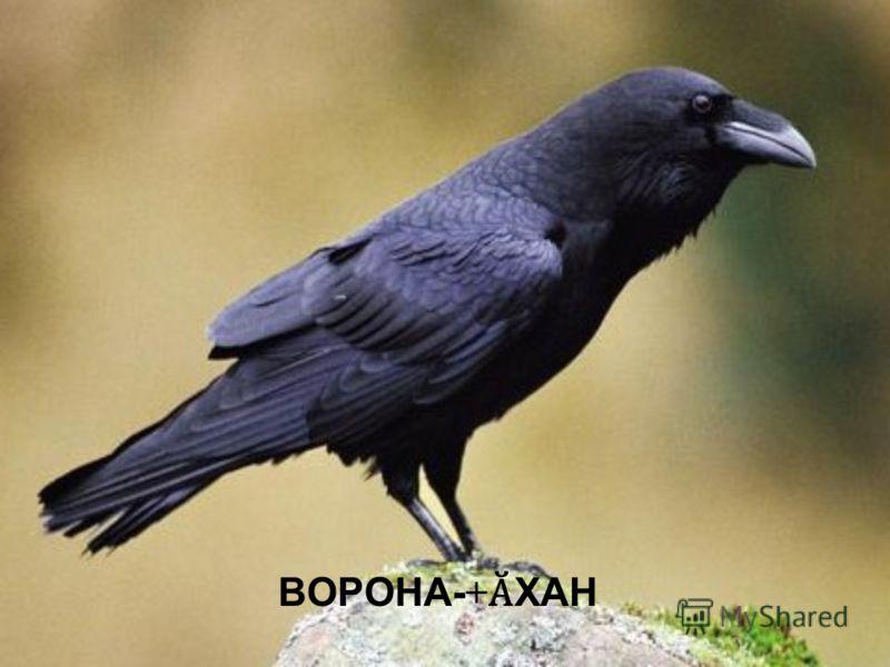 ВОРОНА-+ Ӑ ХАН