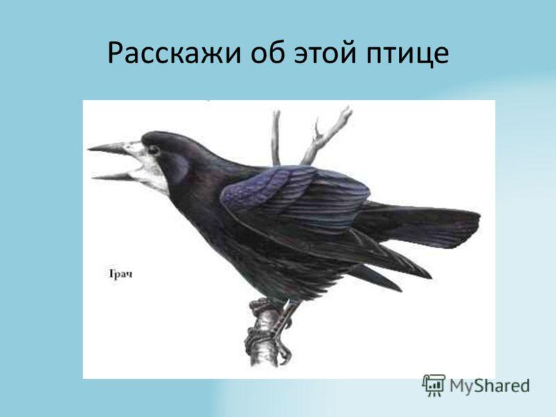 Расскажи об этой птице