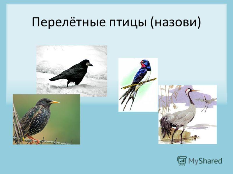 Перелётные птицы (назови)