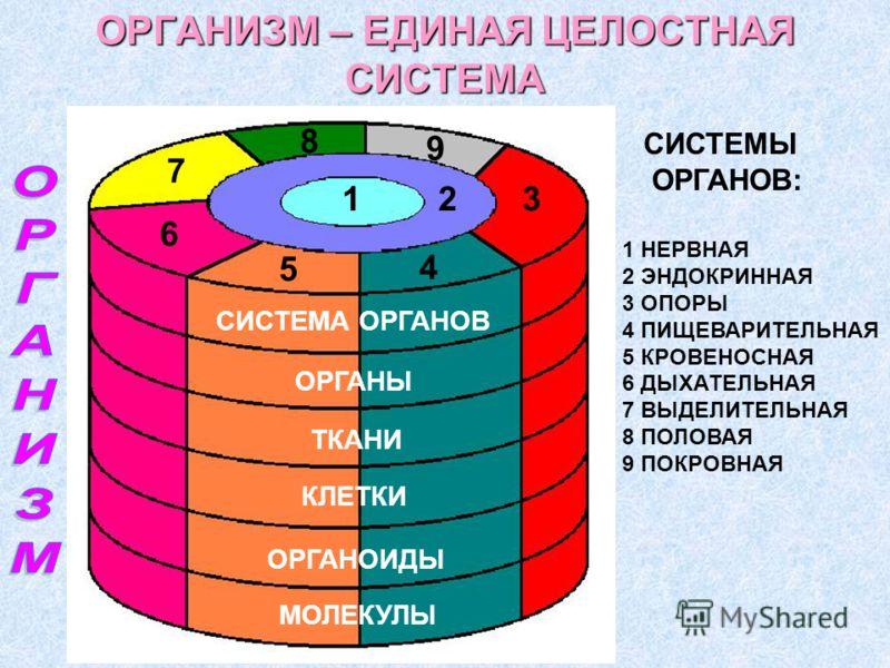 ОРГАНИЗМ – ЕДИНАЯ ЦЕЛОСТНАЯ СИСТЕМА МОЛЕКУЛЫ ОРГАНОИДЫ КЛЕТКИ ТКАНИ ОРГАНЫ СИСТЕМА ОРГАНОВ 123 4 5 6 7 8 9 1 НЕРВНАЯ 2 ЭНДОКРИННАЯ 3 ОПОРЫ 4 ПИЩЕВАРИТЕЛЬНАЯ 5 КРОВЕНОСНАЯ 6 ДЫХАТЕЛЬНАЯ 7 ВЫДЕЛИТЕЛЬНАЯ 8 ПОЛОВАЯ 9 ПОКРОВНАЯ СИСТЕМЫ ОРГАНОВ: