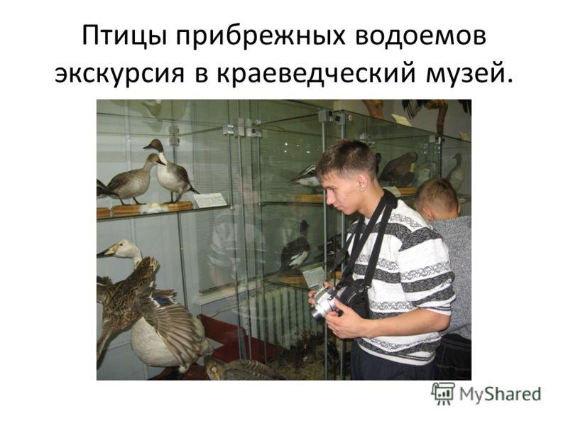 Птицы прибрежных водоемов экскурсия в краеведческий музей.