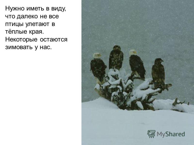 Нужно иметь в виду, что далеко не все птицы улетают в тёплые края. Некоторые остаются зимовать у нас.
