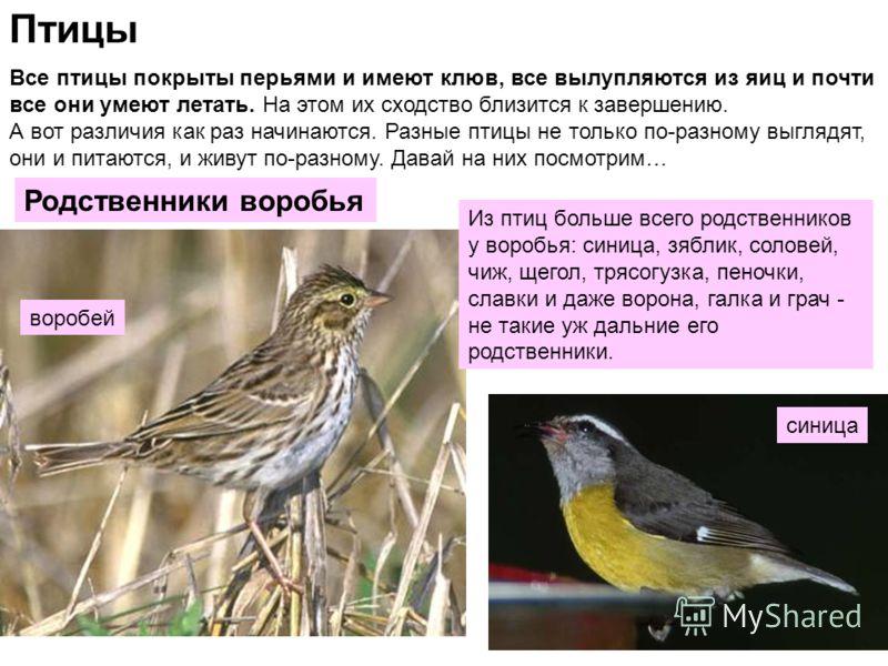 Птицы Все птицы покрыты перьями и имеют клюв, все вылупляются из яиц и почти все они умеют летать. На этом их сходство близится к завершению. А вот различия как раз начинаются. Разные птицы не только по-разному выглядят, они и питаются, и живут по-ра
