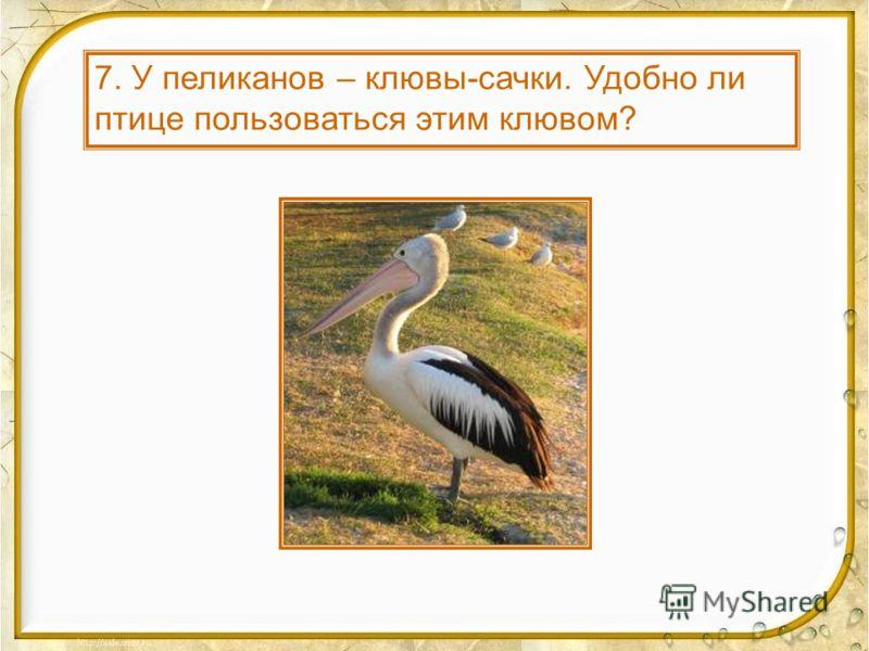 10. Почему у лесного кулика-вальдшнепа клюв тонкий, длинный?
