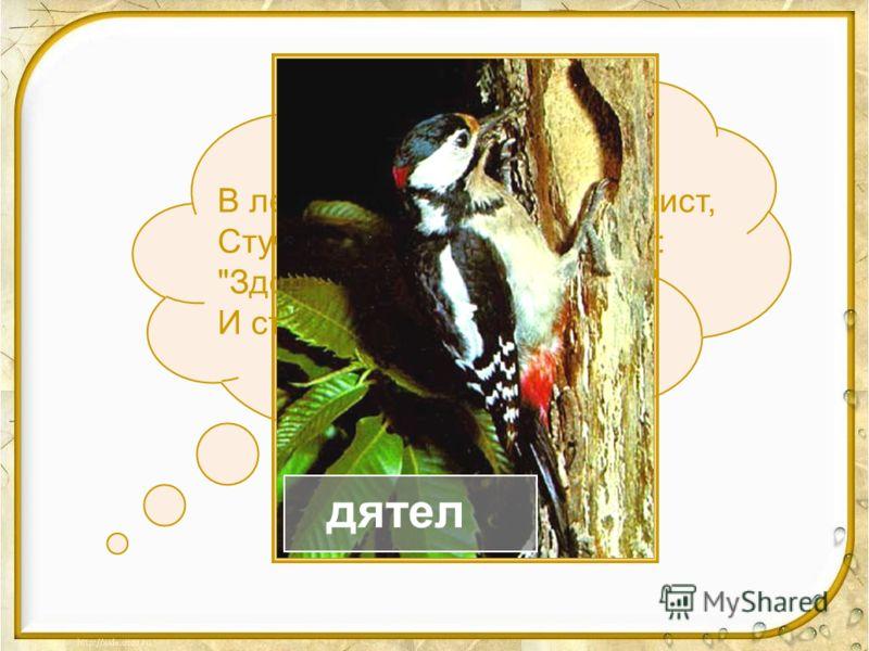 Непоседа пёстрая, Птица длиннохвостая, Птица говорливая, Самая болтливая. Вещунья белобока, А зовут ее... сорока