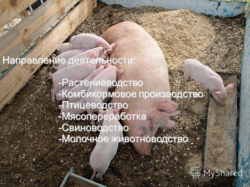 Направление деятельности: -Растениеводство -Растениеводство -Комбикормовое производство -Комбикормовое производство -Птицеводство -Птицеводство -Мясопереработка -Мясопереработка -Свиноводство -Свиноводство -Молочное животноводство -Молочное животново