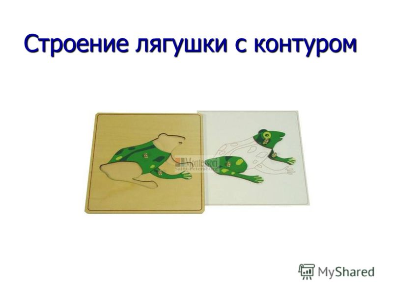 Строение лягушки с контуром