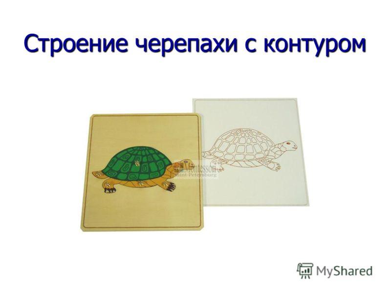 Строение черепахи с контуром