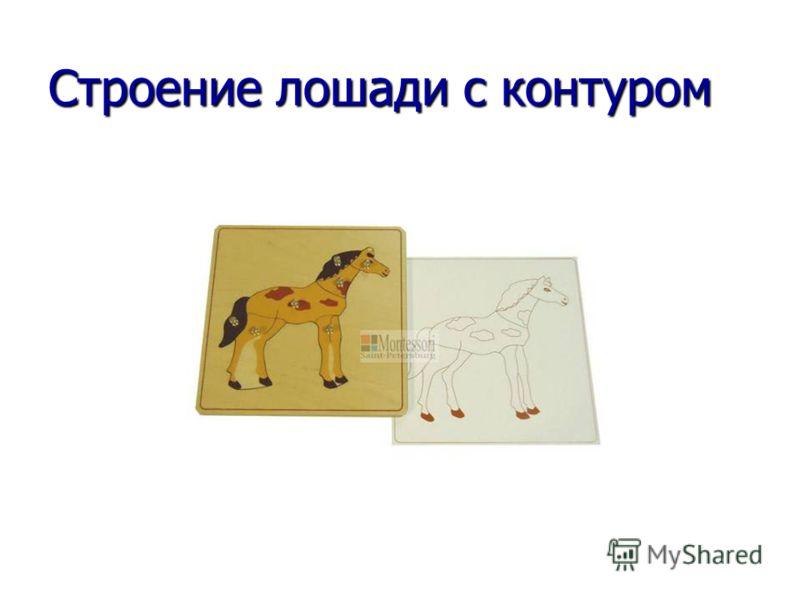 Строение лошади с контуром