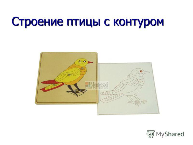 Строение птицы с контуром