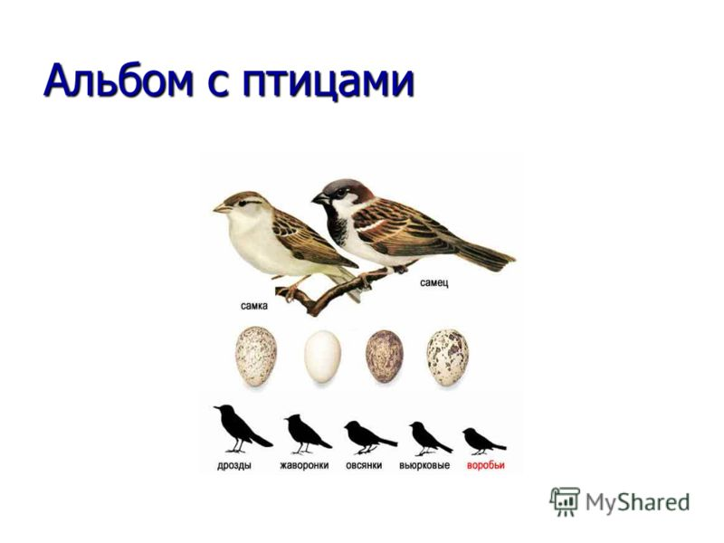 Альбом с птицами