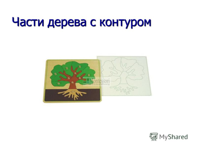 Части дерева с контуром