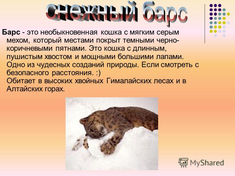 Барс - это необыкновенная кошка с мягким серым мехом, который местами покрыт темными черно- коричневыми пятнами. Это кошка с длинным, пушистым хвостом и мощными большими лапами. Одно из чудесных созданий природы. Если смотреть с безопасного расстояни