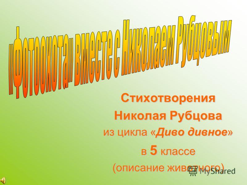 Стихотворения Николая Рубцова из цикла «Диво дивное» в 5 классе (описание животного)
