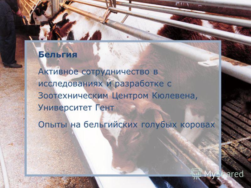 Бельгия Активное сотрудничество в исследованиях и разработке с Зоотехническим Центром Кюлевена, Университет Гент Опыты на бельгийских голубых коровах