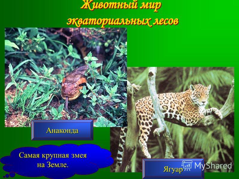 Анаконда Ягуар Самая крупная змея на Земле.