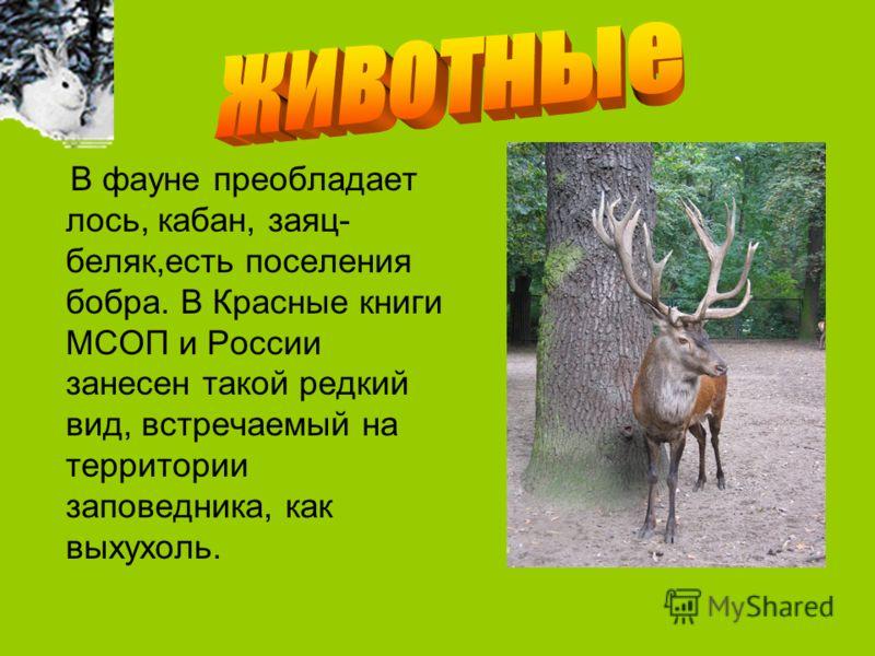 В фауне преобладает лось, кабан, заяц- беляк,есть поселения бобра. В Красные книги МСОП и России занесен такой редкий вид, встречаемый на территории заповедника, как выхухоль.