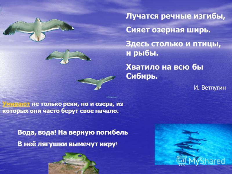 Лучатся речные изгибы, Сияет озерная ширь. Здесь столько и птицы, и рыбы. Хватило на всю бы Сибирь. И. Ветлугин УмираютУмирают не только реки, но и озера, из которых они часто берут свое начало. Вода, вода! На верную погибель В неё лягушки вымечут ик