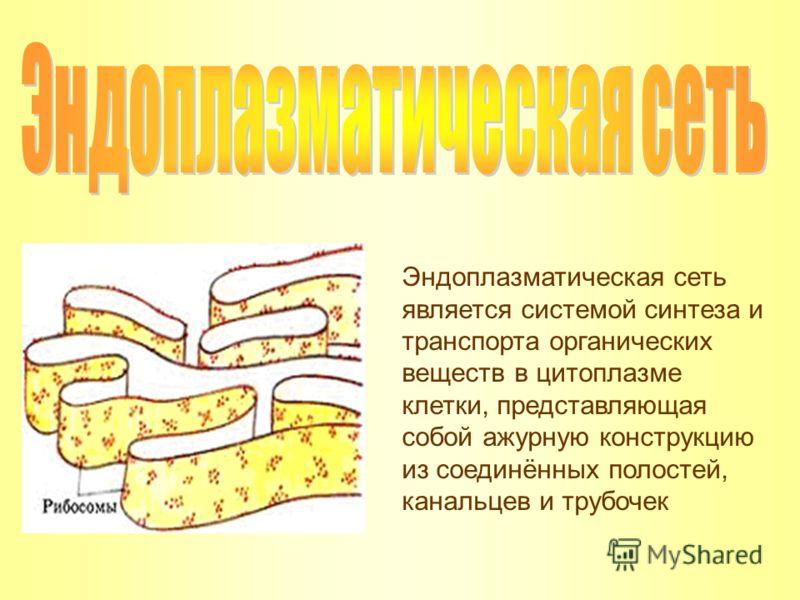 Эндоплазматическая сеть является системой синтеза и транспорта органических веществ в цитоплазме клетки, представляющая собой ажурную конструкцию из соединённых полостей, канальцев и трубочек