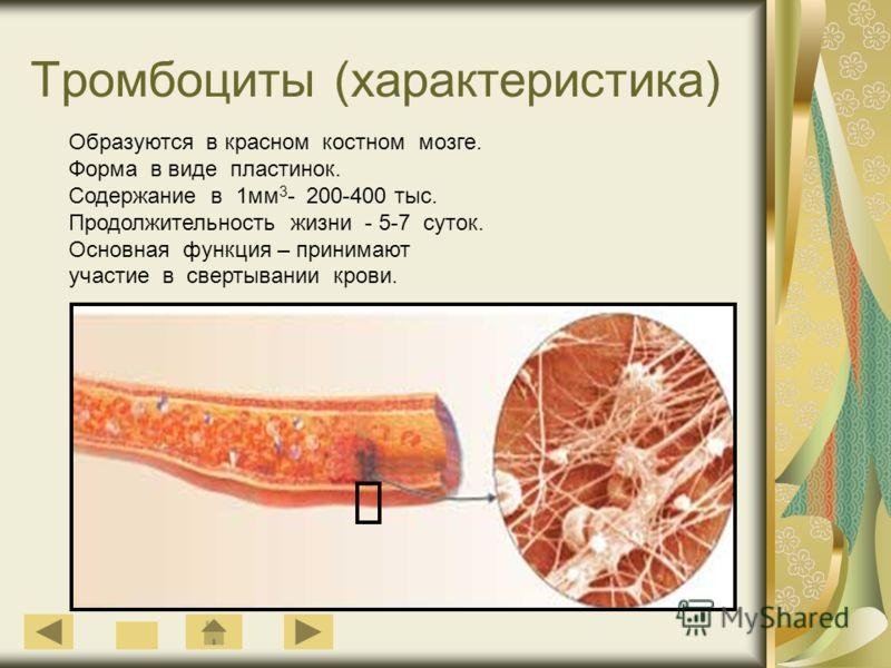 Тромбоциты (характеристика) Образуются в красном костном мозге. Форма в виде пластинок. Содержание в 1мм 3 - 200-400 тыс. Продолжительность жизни - 5-7 суток. Основная функция – принимают участие в свертывании крови.