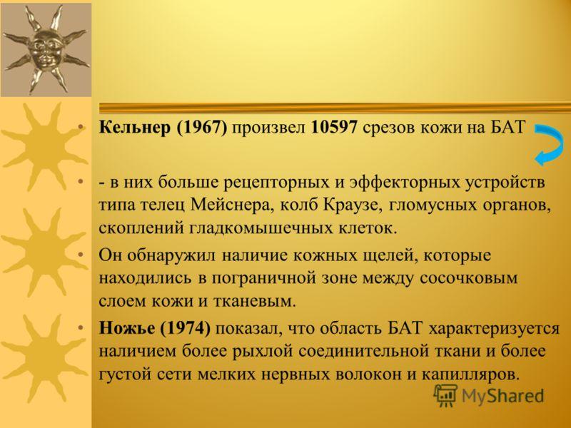Кельнер (1967) произвел 10597 срезов кожи на БАТ - в них больше рецепторных и эффекторных устройств типа телец Мейснера, колб Краузе, гломусных органов, скоплений гладкомышечных клеток. Он обнаружил наличие кожных щелей, которые находились в погранич