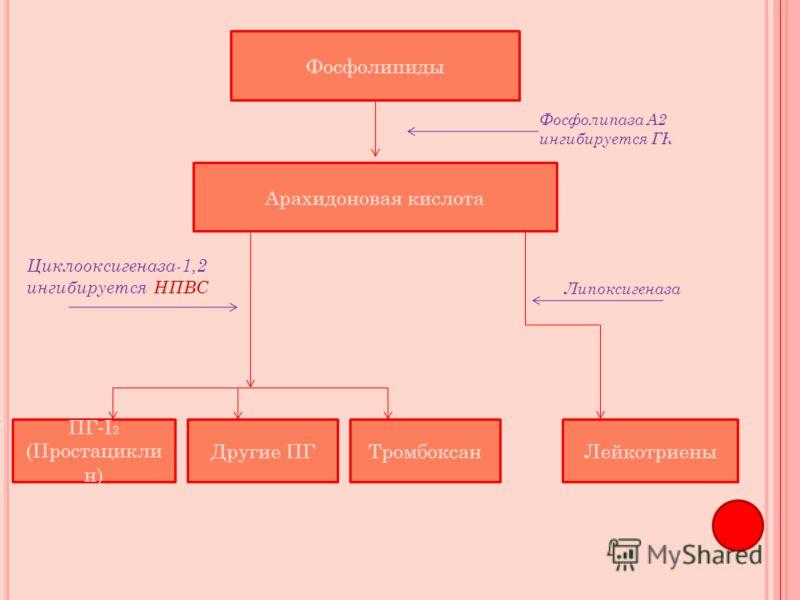 Фосфолипиды Арахидоновая кислота ПГ-I 2 (Простацикли н) Другие ПГТромбоксанЛейкотриены Фосфолипаза А2 ингибируется ГК Циклооксигеназа-1,2 ингибируется НПВС Липоксигеназа